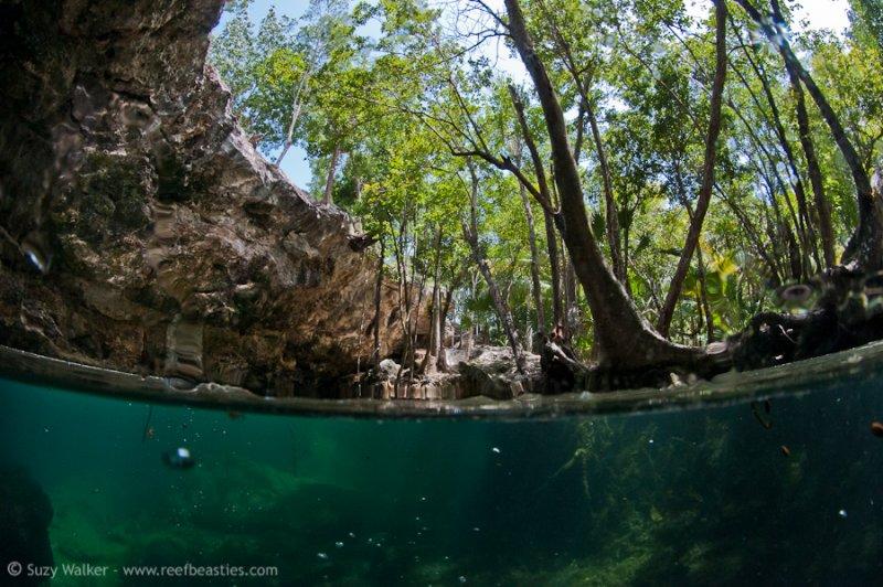 Chac Mool Cenote split level 2