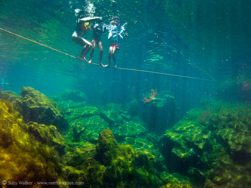 Standing on a rope, Eden Cenote