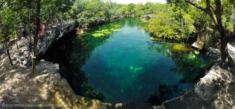 Eden Cenote from above