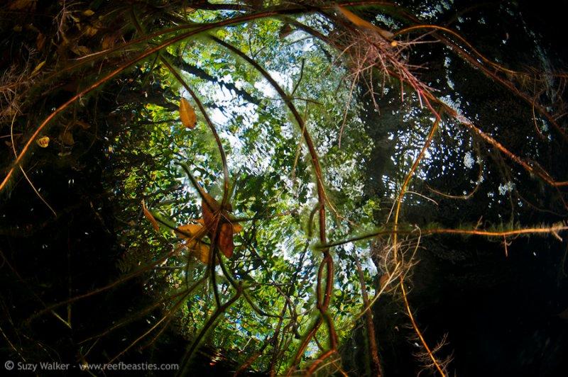 snells window at Eden Cenote