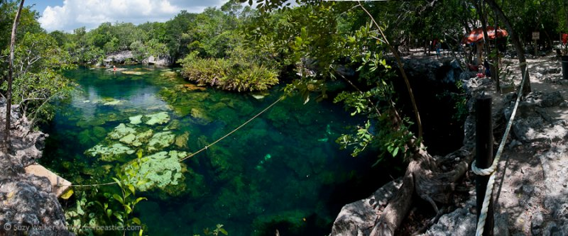 Eden Cenote view from the top
