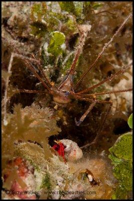 Crab get together