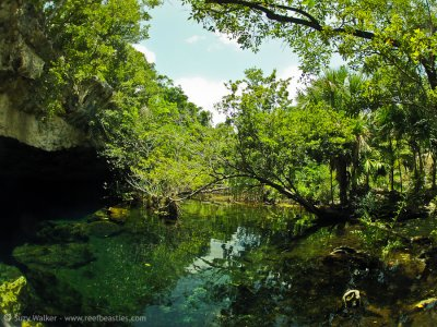 Kukulkan Cenote 3