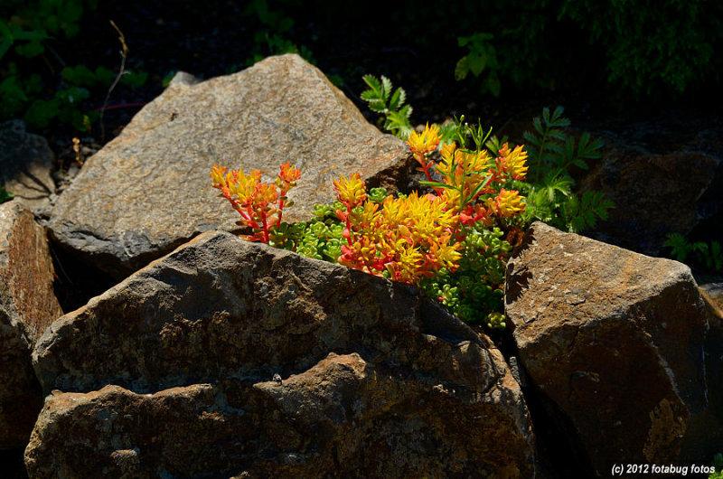 Beauty On The Rocks