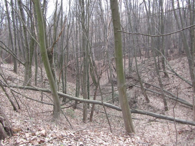 the park is filled with young trees and steep ravines...