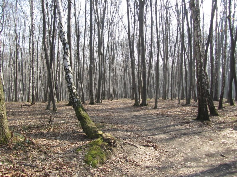 ...preceded by another two days in the old Jewish quarter of Krakow, and the camps of Birkenau and Auschwitz