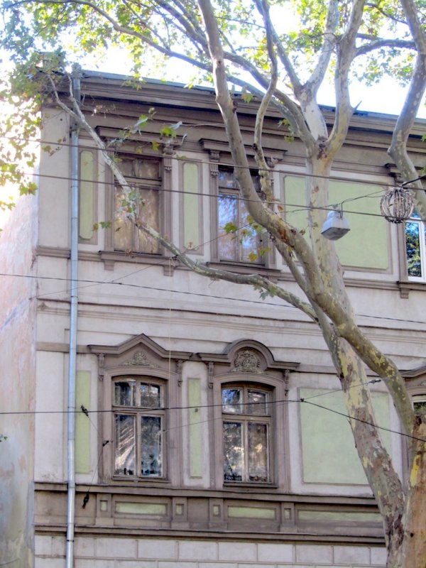 ...sycamores and interesting architecture