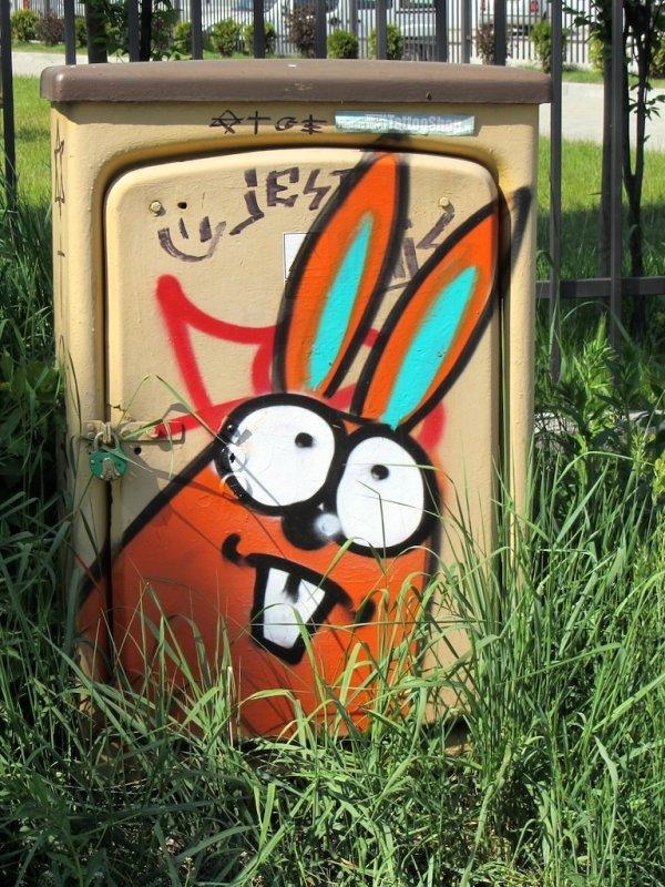 theres that dang rabbit again