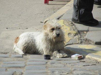 a tired shopper taking a cigarette break