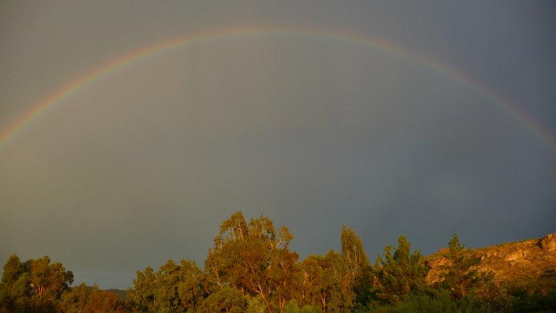 Rainbow over the Eucalyptus Forest