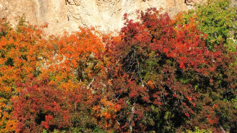 Autumn at Boyce Thompson Arboretum - A Band of Color