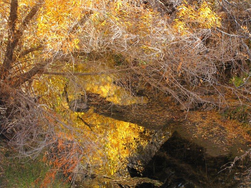 Reflections in Queen Creek