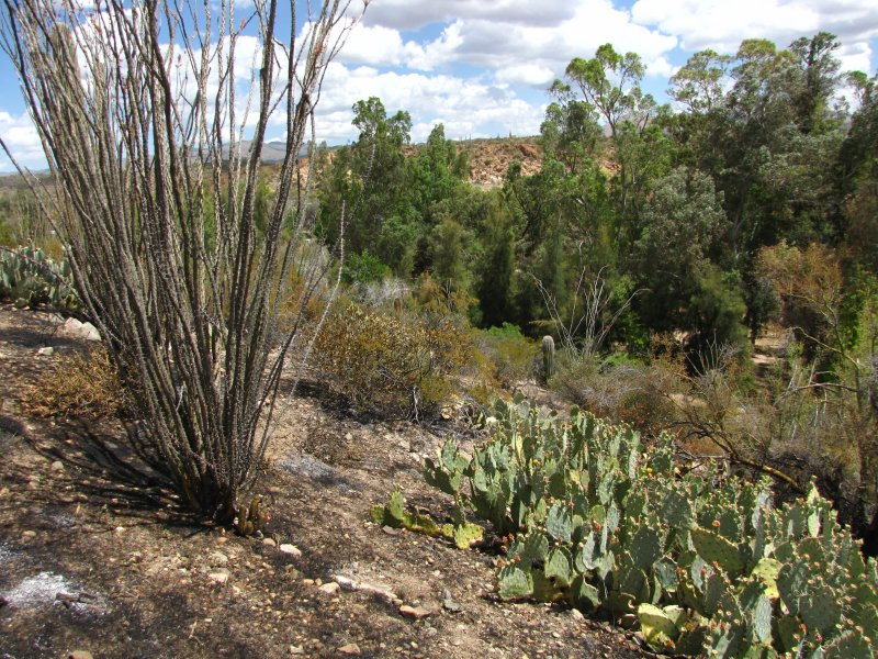 The Picket Fire burned the upper-trail-side of the western portion of the high Trail
