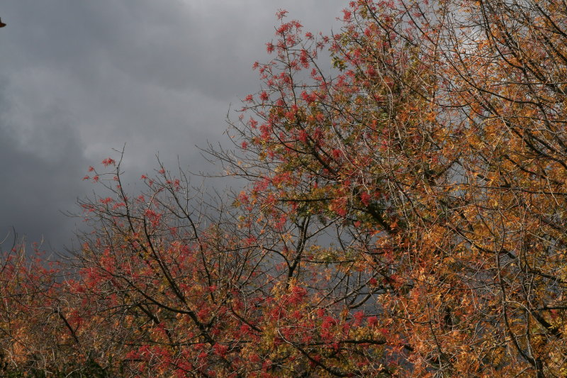 Cloudy Day, Fall Color