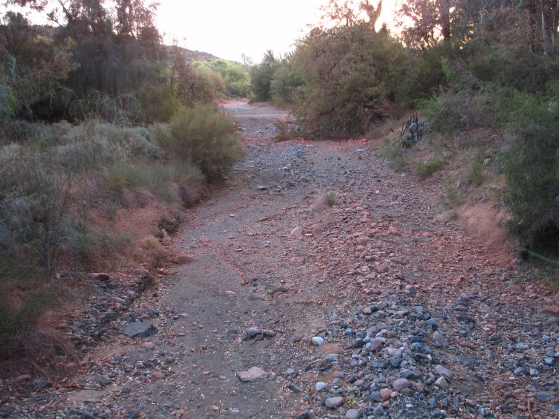 Fire Retardent Covers Plants and Ground in Silver King Wash