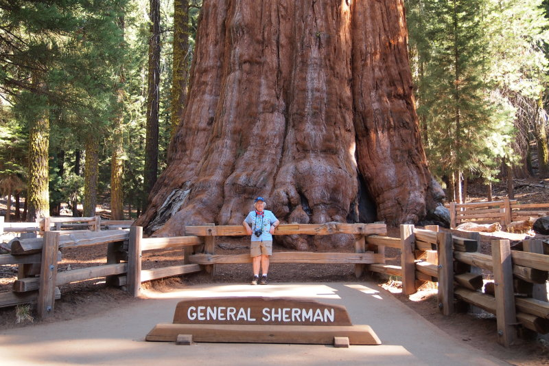 Shirley in front of General Sherman tree. The volume of its trunk makes this tree the biggest on earth. Sequoia National Park