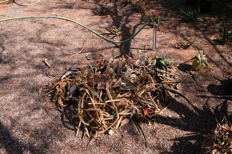 A pile of dead plants