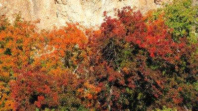 Autumn at Boyce Thompson Arboretum - A Band of Color