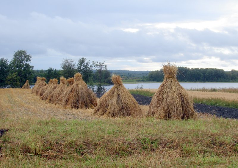 Stacked Hay