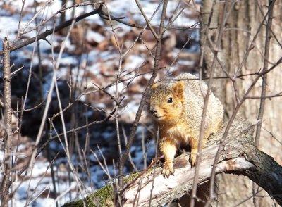 any nuts???