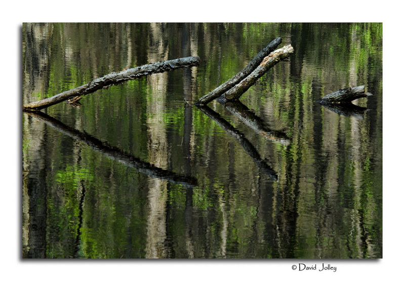 Swamp Reflection, Cades Cove