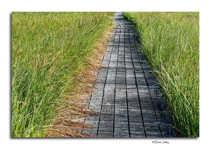 Boardwalk, Grass River Natural Area