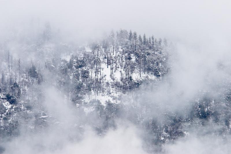 Cold Spring Arbor