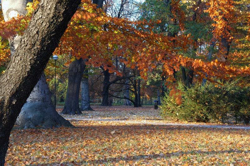 autumn 05