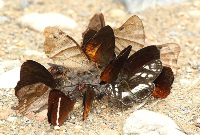 Butterflies San-Isidro