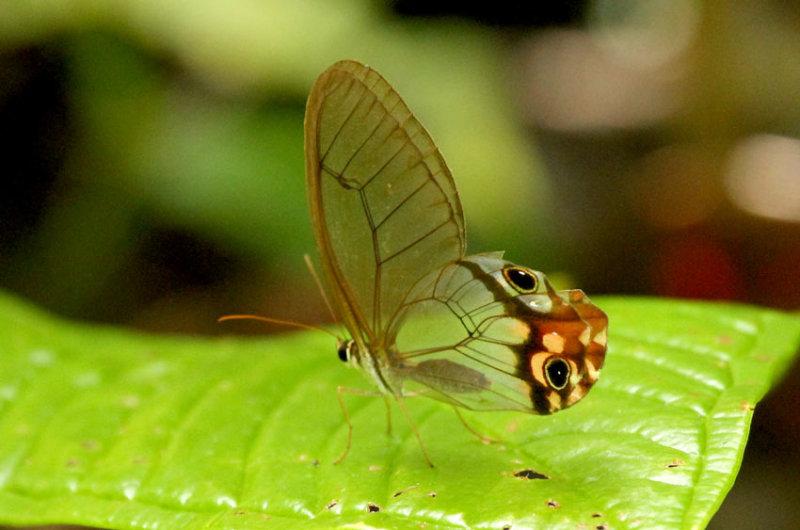 Butterfly Playa del Oro2
