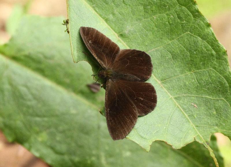 Butterfly San Isidro2
