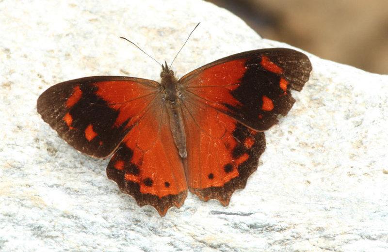 Butterfly San Isidro5