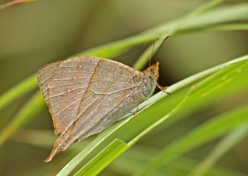Butterfly-Bellavista1b.jpg