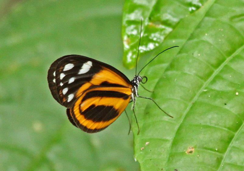Butterfly-Sani9b.jpg