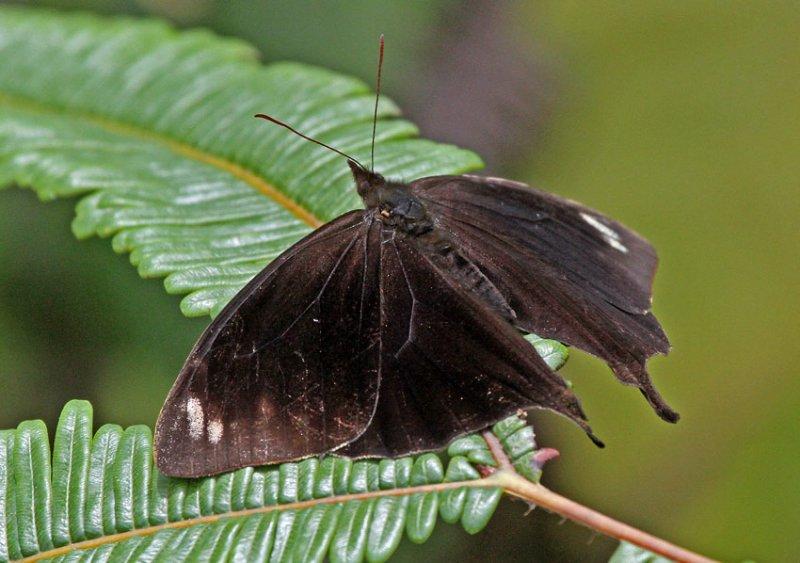 Butterfly-Guacamayos.jpg