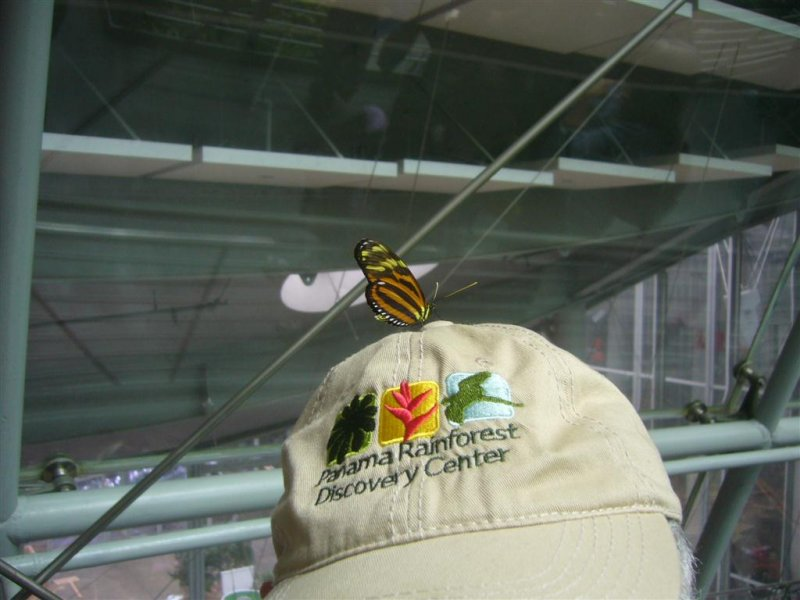 Butterfly on Bobs Hat