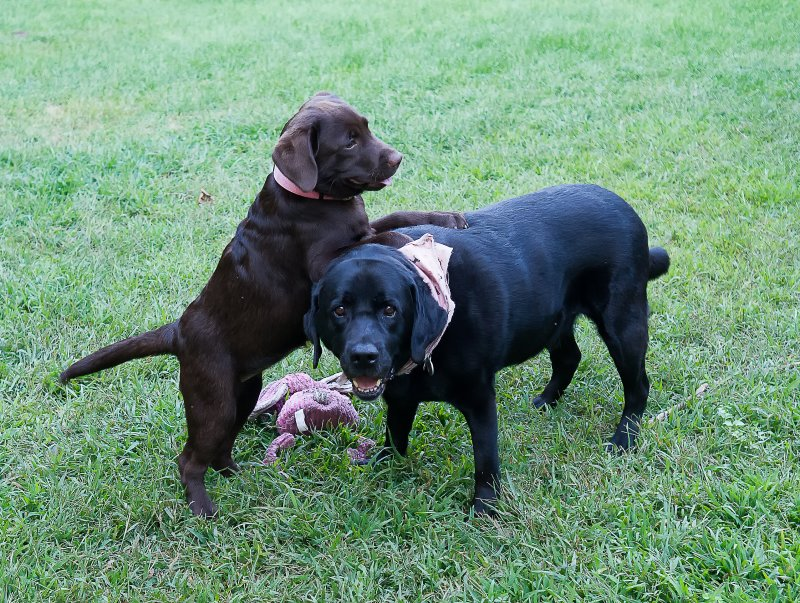 Puppy license still intact for now with Java  August 25 2012 day 49.jpg