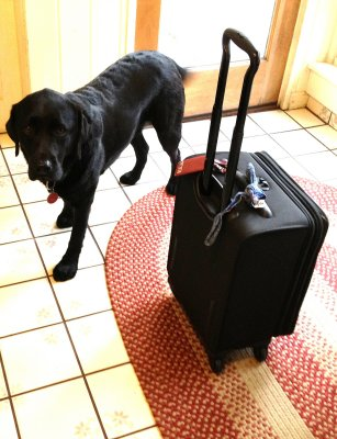 Moki and Suitcase November 29 2011.jpg