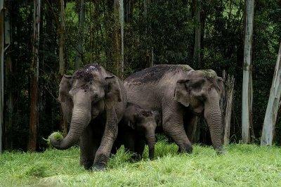 DSC 30036 wild elephants.JPG