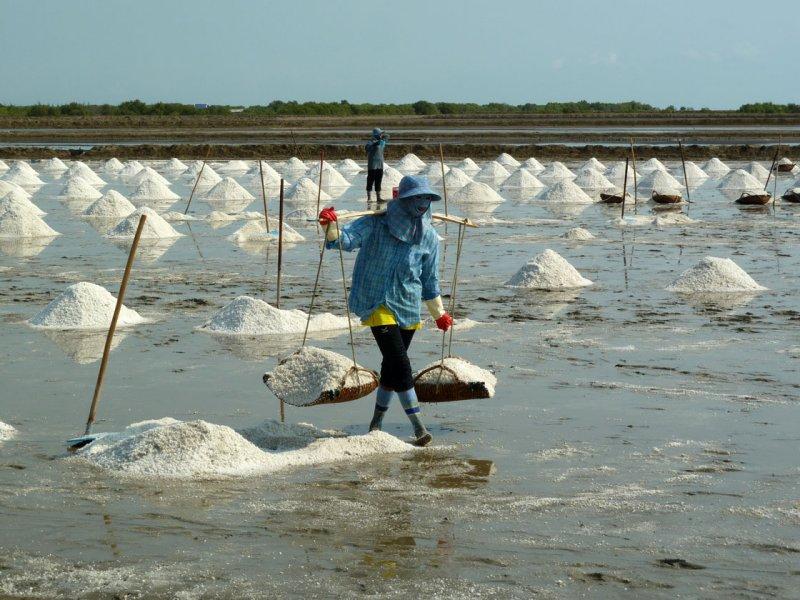 Harvesting salt-later steps