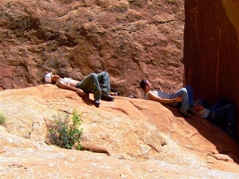 Wild Life In Desert