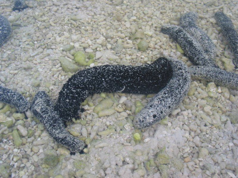 Sea slugs are everywhere 086.jpg