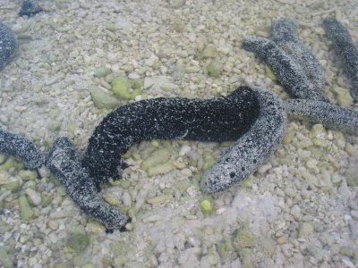 Sea slugs are everywhere 086.jpg