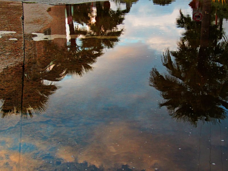 RainPuddle0125