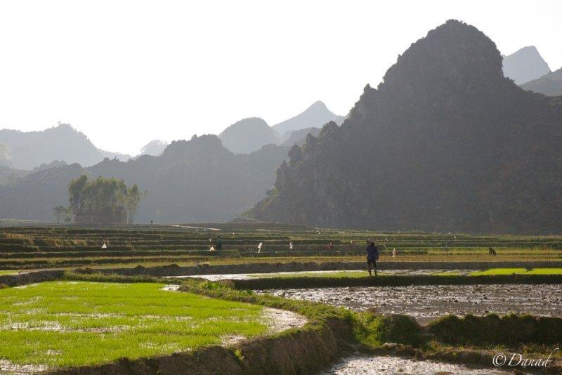 Dong Van Rice Fields.