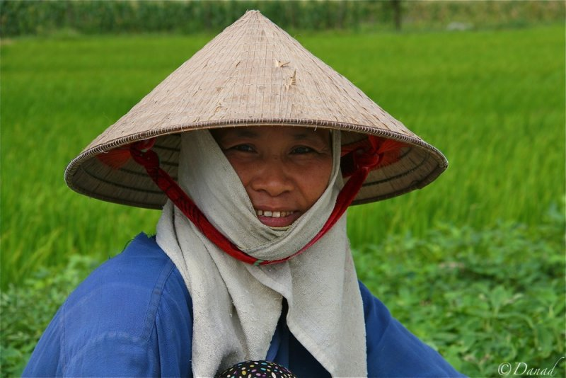 In the rice field.