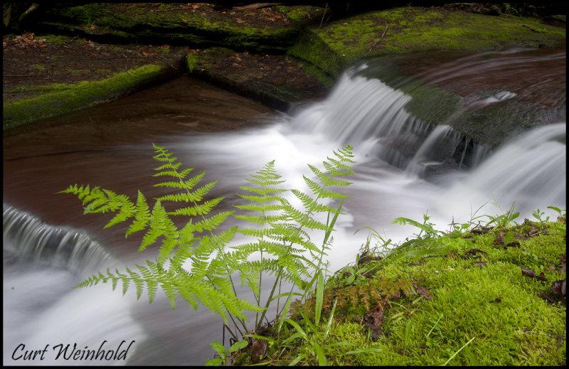 Four mile ferns