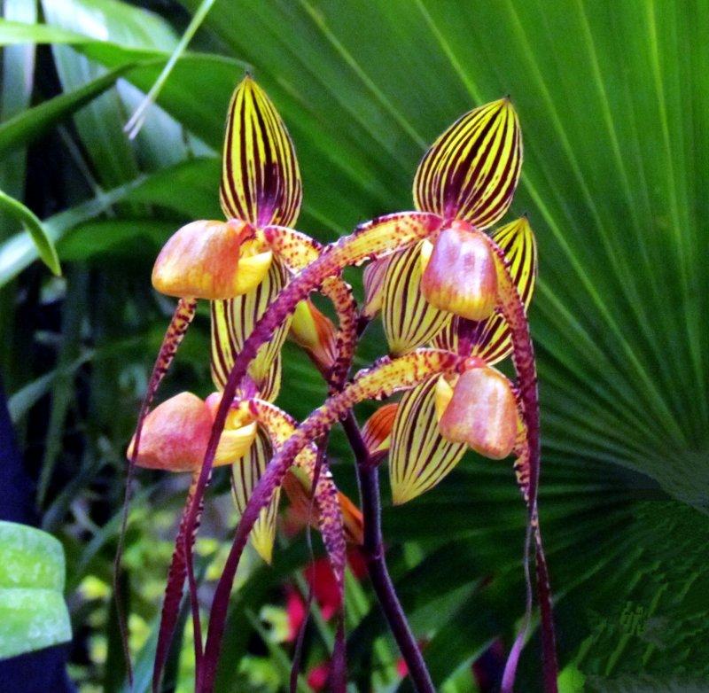 Orchids 072.jpg