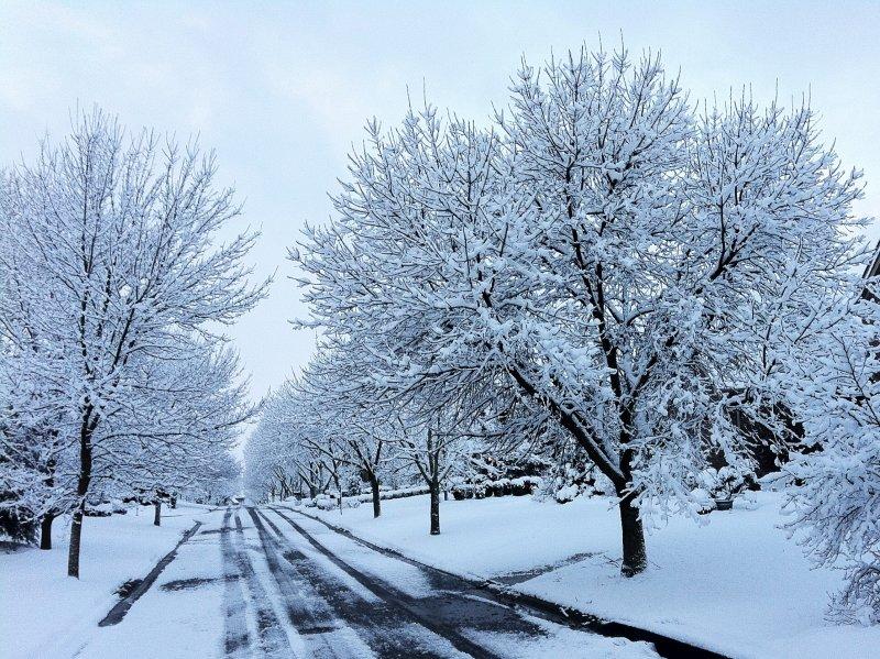 Snow also Comes to Kentucky