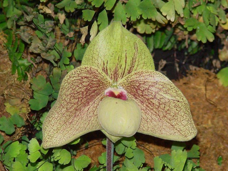 Orchids2 021.jpg